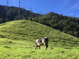 Valle de Cococra