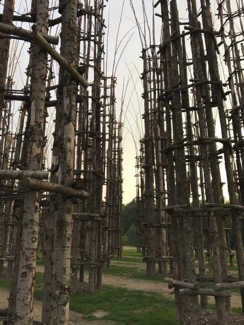 Le colonne della Cattedrale Vegetale